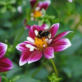 Fleur - Parc Floral de La Source Orléans - Loiret