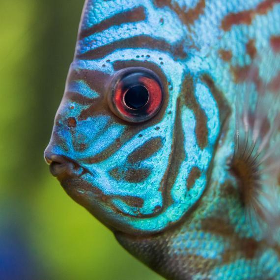 Aquarium de Touraine - Olivier Pain