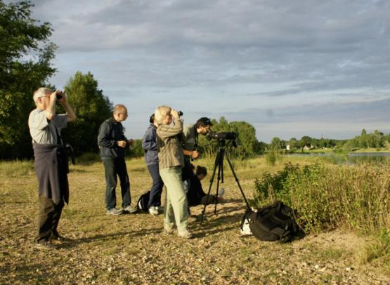 sologne-nature-environnement-obervation-etang-balade-oiseaux