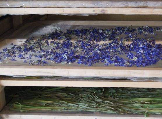 sechoir-plantes-loches-valdeloire