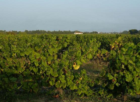 vigneron-muscadet-sevremoine