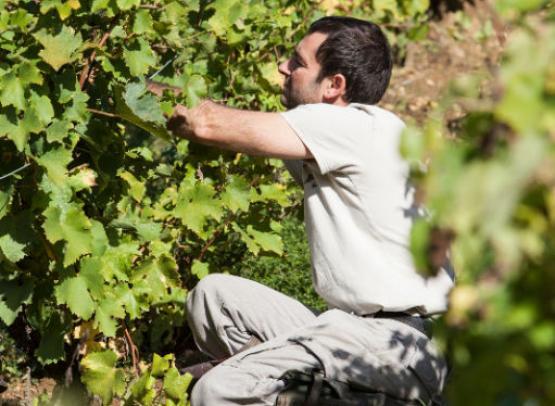 Vincent Carême - Vouvray vineyard - France