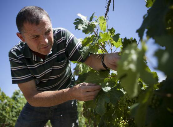 cave-vins-bourgueil-robert-marcel-credit-2018-cvb