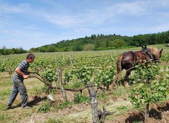 Béatrice et Pascal Lambert - Chinon vineyard - Cravant-les-Coteaux, France.
