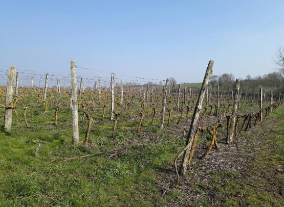 vignoble-grand-retais-pommeraye-jardins-anjou