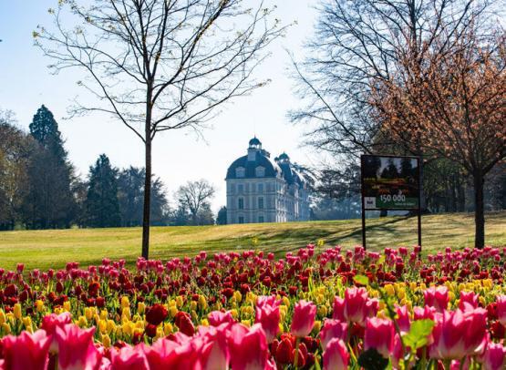 Tulipes-au-Chateau-de-Cheverny-Mir-Photos-ADT41--2-
