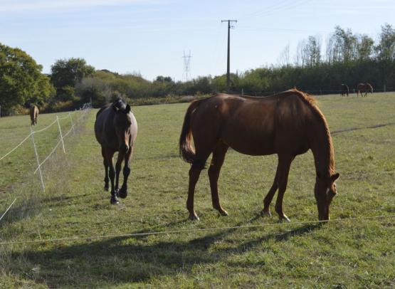 Bois_Tillac_chevaux