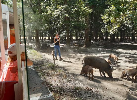 safari_train_reserve_beaumarchais_autreche