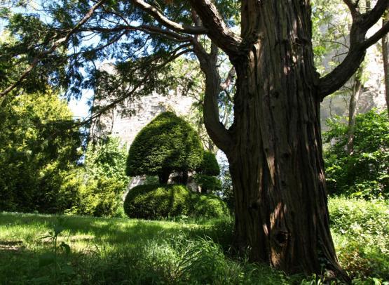 chateau-de-cinq-mars-sequoia
