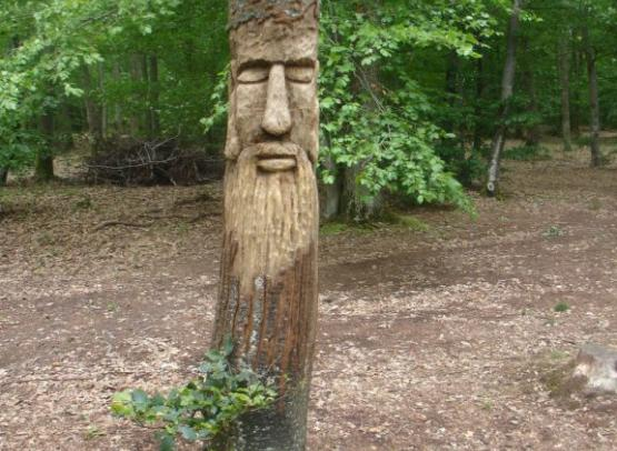 Forêt Mgis 1