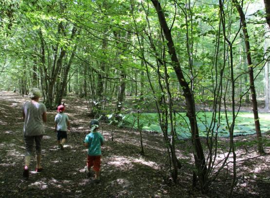 Forêt Mgis 3