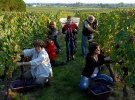 Maison Audebert - Grape harvest - Bourgueil, France.