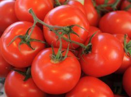 légumes-©nathalie-Gautier-pays-ancenis-DEG-1