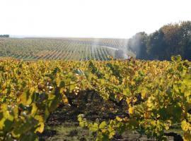 Crédit domaine petit métris vignoble vins de loire 49 vignes chaume