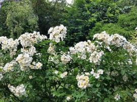 rosier 'rosalita' - Copie